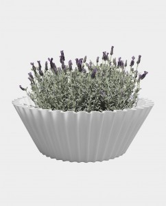 Sweet cake white - flower pot 2
