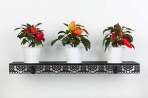 Granny black - plants 1