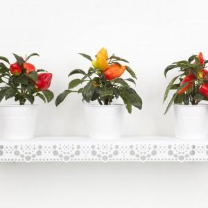 Granny white - plants