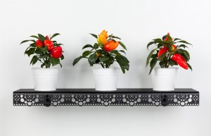 granny wall shelf black plants HOME