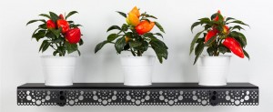 granny wall shelf black plants press download