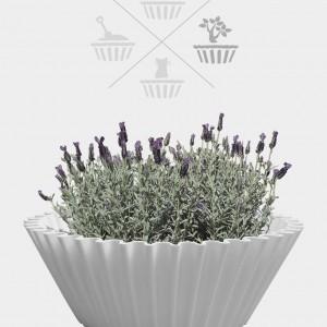 Sweet cake white - flower pot 2
