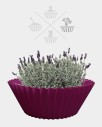 Sweet cake - fuchsia - flower pot 2