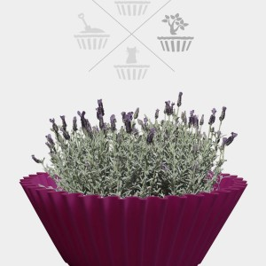 Sweet cake - fuchsia - flower pot 2