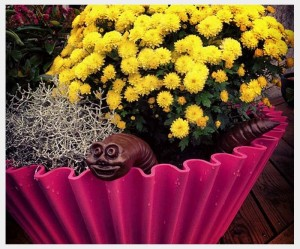 Happy customers - sweet cake planter pink 3